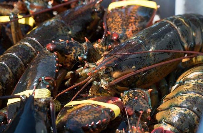 https: img.okezone.com content 2020 11 25 301 2315760 5-daerah-penghasil-lobster-terbaik-di-indonesia-oD76U0KDLz.JPG