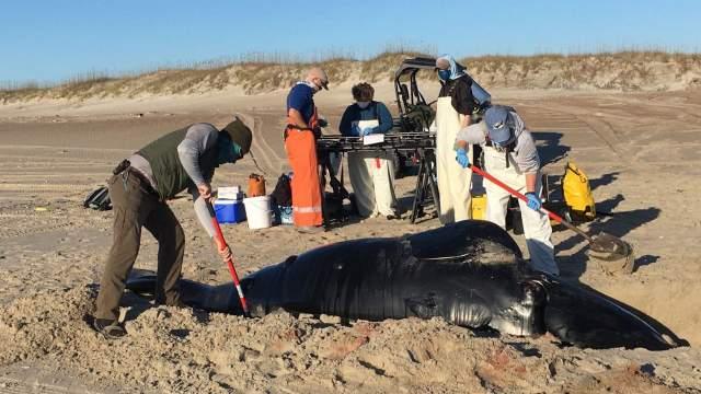 https: img.okezone.com content 2020 11 25 612 2316040 sedih-anak-ikan-paus-langka-ditemukan-mati-terdampar-usai-dilahirkan-9oQcJhHFKp.jpg