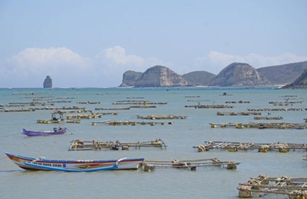 https: img.okezone.com content 2020 11 27 320 2317098 ekspor-benih-lobster-dihentikan-karena-tidak-untungkan-negara-TNk7Vnza58.jpg