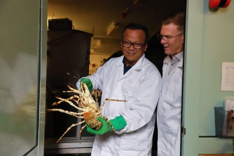 https: img.okezone.com content 2020 11 27 320 2317567 hashim-djojohadikusumo-buka-bukaan-soal-ekspor-benih-lobster-S1cMxL1Kmi.jpg