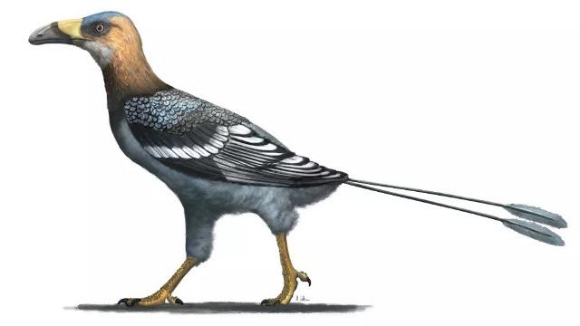 https: img.okezone.com content 2020 11 27 612 2317341 ditemukan-fosil-burung-aneh-berusia-68-juta-tahun-paruhnya-seperti-sabit-xd1EUEv1fb.jpg