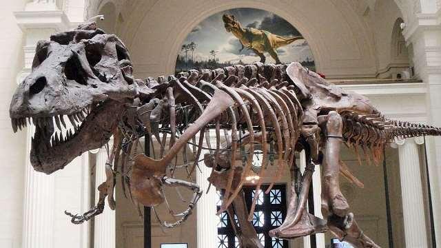 https: img.okezone.com content 2020 11 27 612 2317440 raja-karnivora-t-rex-tumbuh-lebih-cepat-dibanding-dinosaurus-lain-WA626Y95qI.jpg