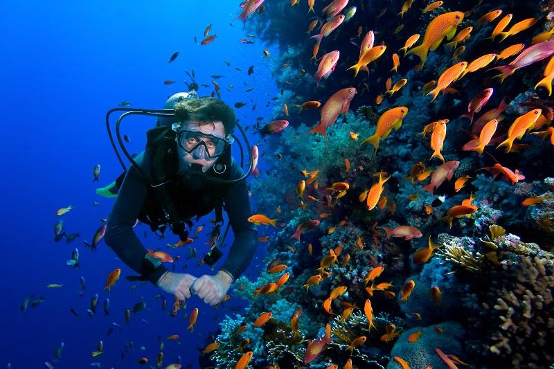 https: img.okezone.com content 2020 11 28 406 2317795 indonesia-masih-dipercaya-international-sebagai-destinasi-wisata-aman-J2B9sXZVMB.jpg