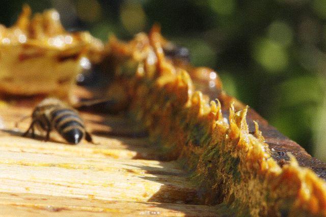 https: img.okezone.com content 2020 11 30 481 2318633 ini-5-manfaat-propolis-lebah-untuk-kesehatan-yang-wajib-diketahui-QD9hm9su7W.jpg