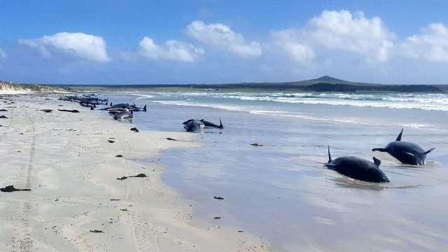 https: img.okezone.com content 2020 11 30 612 2318969 heboh-97-ikan-paus-ditemukan-mati-terdampar-di-pantai-terpencil-ciCbdYeJIv.jpg