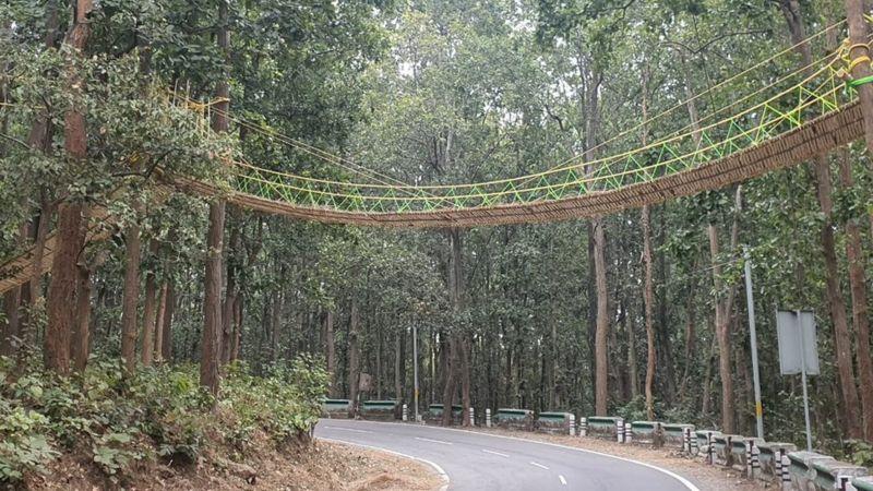 https: img.okezone.com content 2020 12 01 18 2319682 unik-india-bangun-jembatan-khusus-bagi-hewan-reptil-0cPR22gGlm.jpg