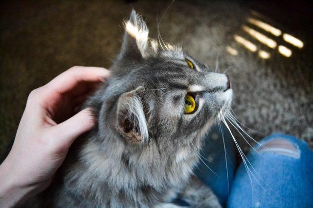 https: img.okezone.com content 2020 12 01 612 2319774 tahukah-kamu-ini-penyebab-kucing-takut-dengan-air-enumaqhXiH.jpg