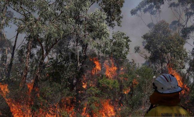https: img.okezone.com content 2020 12 02 406 2320183 76-ribu-hektare-lahan-di-kawasan-wisata-pulau-fraser-australia-ludes-terbakar-tSPHQwOPzz.JPG
