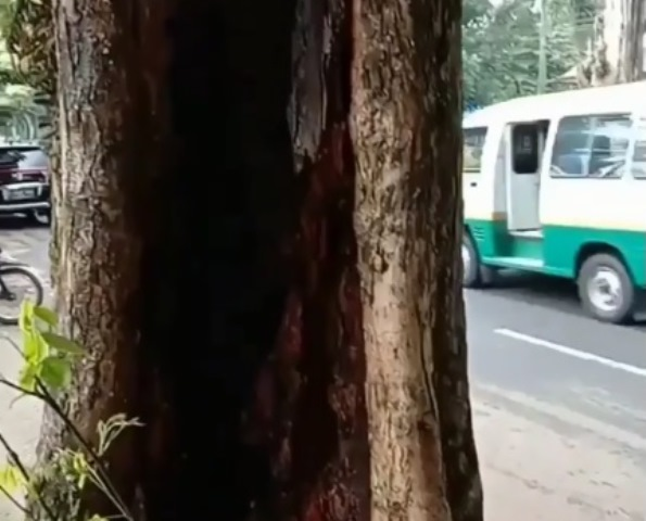 https: img.okezone.com content 2020 12 02 612 2319973 viral-pohon-terbakar-sendiri-meski-diguyur-hujan-netizen-bentar-lagi-ada-yang-bawa-sesajen-1W6B8ywcfB.jpg