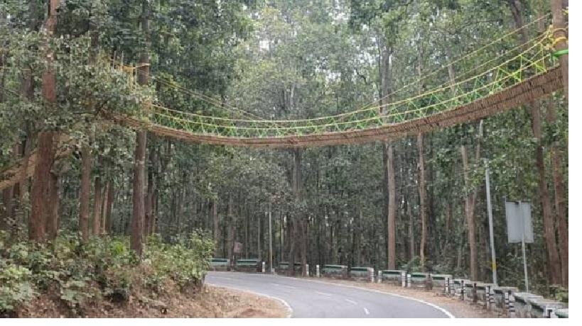 https: img.okezone.com content 2020 12 02 612 2319978 unik-ada-jembatan-khusus-reptil-melintas-jalan-raya-Zc83i2ct2g.jpg