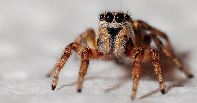 https: img.okezone.com content 2020 12 02 612 2320572 syok-berat-ada-laba-laba-raksasa-di-mobilnya-wanita-ini-ogah-nyetir-lagi-Gnqv9fadSK.jpg