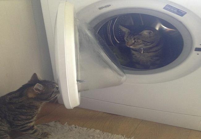 https: img.okezone.com content 2020 12 04 18 2321803 viral-tingkah-lucu-kucing-ini-tinggalkan-pacarnya-di-mesin-cuci-09AhT0ep4v.jpg