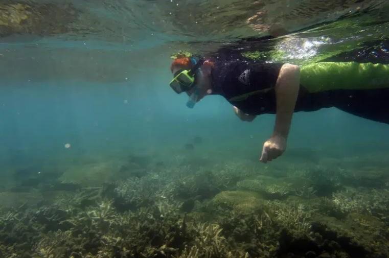 https: img.okezone.com content 2020 12 04 18 2321828 great-barrier-reef-australia-terancam-punah-akibat-perubahan-iklim-xEdtRWoP3k.jpg