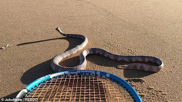 https: img.okezone.com content 2020 12 11 18 2325957 viral-ular-tanpa-kepala-serang-seorang-lelaki-dan-anjingnya-HmZHwmFUIx.jpg