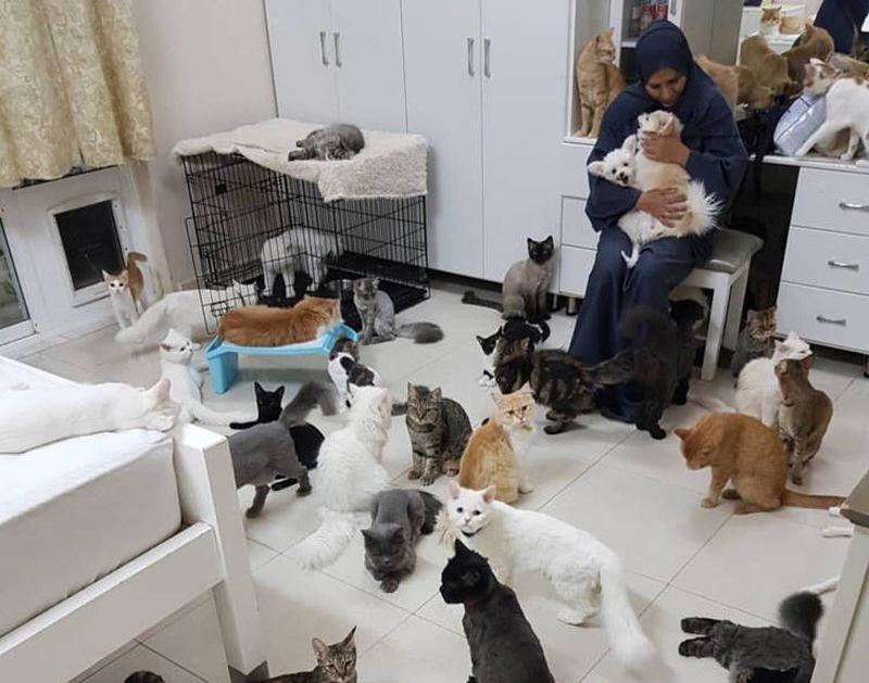 https: img.okezone.com content 2020 12 12 612 2326262 kisah-maryam-yang-habiskan-rp113-juta-per-bulan-untuk-480-kucing-dan-12-anjing-SfirhP1RiO.jpg