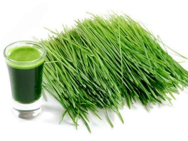 https: img.okezone.com content 2020 12 14 298 2327388 rajin-minum-jus-rumput-gandum-4-manfaat-kesehatan-ini-bisa-kamu-dapat-I8YeFJmxlz.jpg