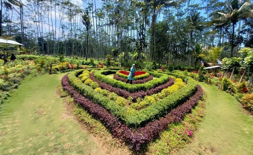 https: img.okezone.com content 2020 12 14 408 2327049 taman-bunga-gading-ledokombo-wisata-baru-memesona-di-pelosok-desa-bdPpmkmjPj.JPG