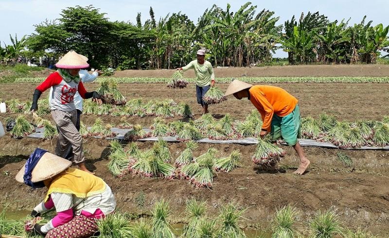 https: img.okezone.com content 2020 12 14 620 2327162 ini-sektor-yang-bikin-pertanian-percepat-pemulihan-ekonomi-ifczbKMdv9.jpeg