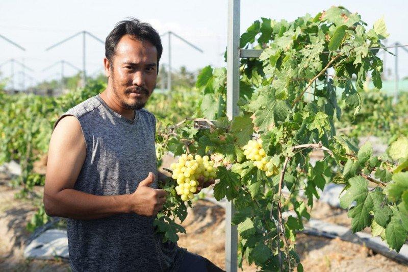 https: img.okezone.com content 2020 12 15 408 2328027 menikmati-wisata-anggur-di-yogyakarta-qKx3b3wf86.jpg