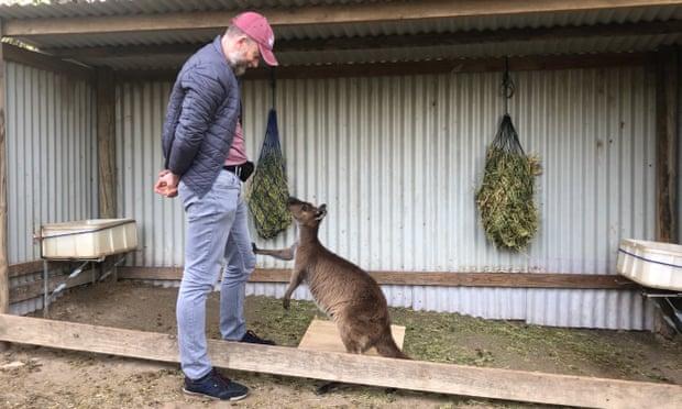 https: img.okezone.com content 2020 12 16 18 2328906 kanguru-bisa-komunikasi-dengan-manusia-KPxzJxGMe2.jpg