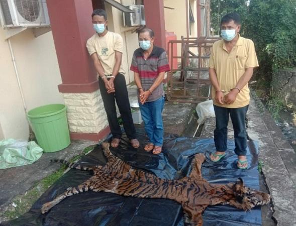 https: img.okezone.com content 2020 12 22 340 2332373 jual-organ-dan-kulit-harimau-sumatera-3-pemburu-ditangkap-oyV2A3FCdc.jpg