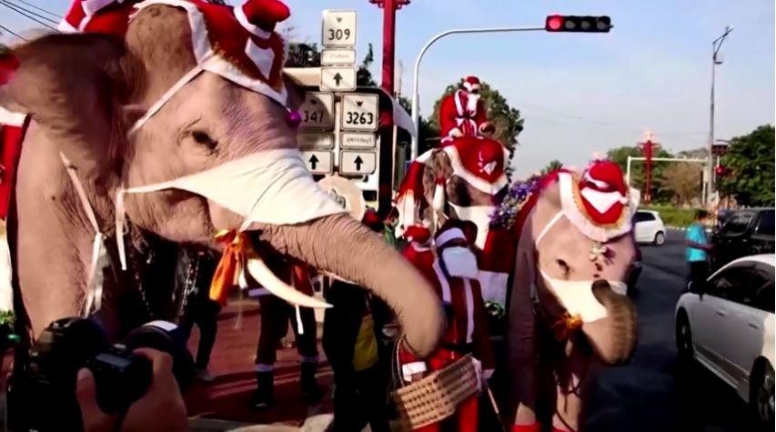 https: img.okezone.com content 2020 12 25 18 2333801 unik-sinterklas-tunggangi-gajah-berikan-hadiah-masker-zyvPjpBnNB.JPG