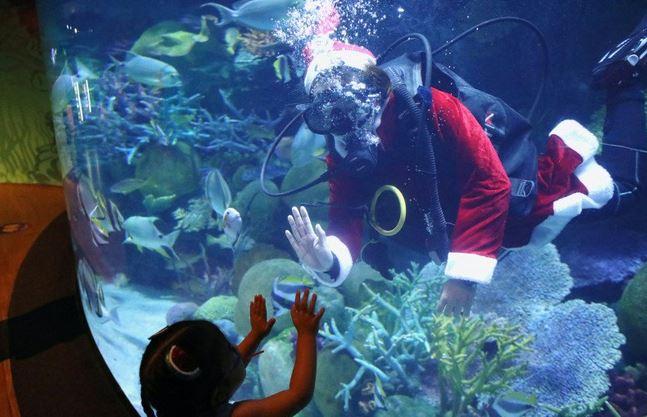 https: img.okezone.com content 2020 12 25 406 2333644 bikin-kaget-sinterklas-sapa-pengunjung-dari-dalam-akuarium-di-thailand-ZmcJplZ4eK.JPG