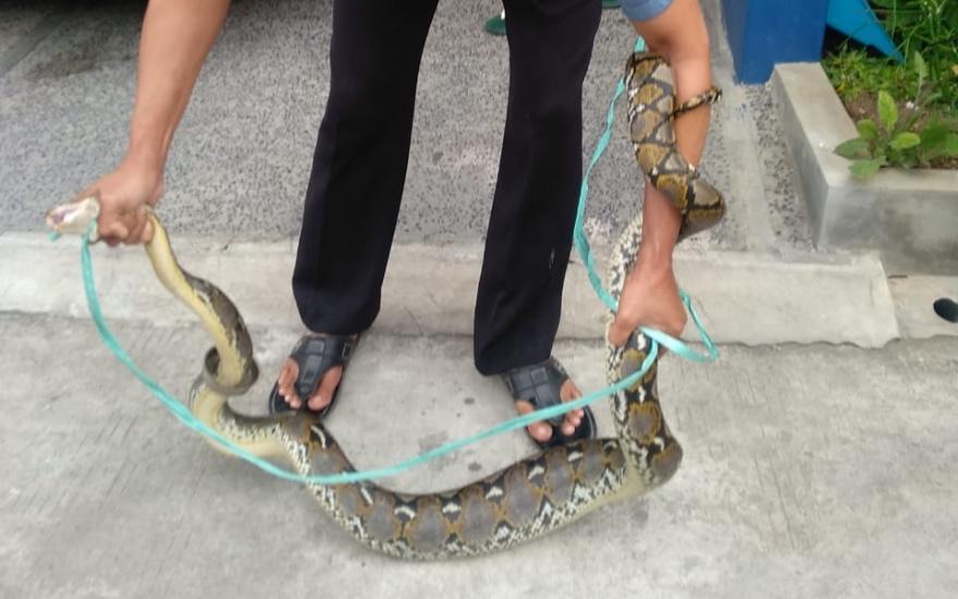 https: img.okezone.com content 2020 12 29 338 2335770 geger-ular-sanca-2-meter-masuk-kamar-mandi-rumah-warga-tangerang-oio7NDnNcV.jpg