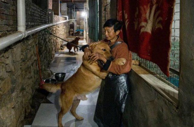 https: img.okezone.com content 2021 01 01 612 2337484 tampung-1-300-anjing-hingga-kuda-wanita-ini-dijuluki-kesatria-hewan-aoSjyZbyQ9.jpeg