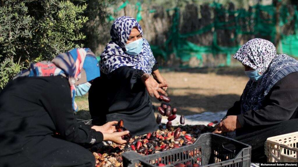 kisah-dua-sarjana-perempuan-jalur-gaza-bertani-demi-mencari-nafkah-LfcNhTqJMg.jpg