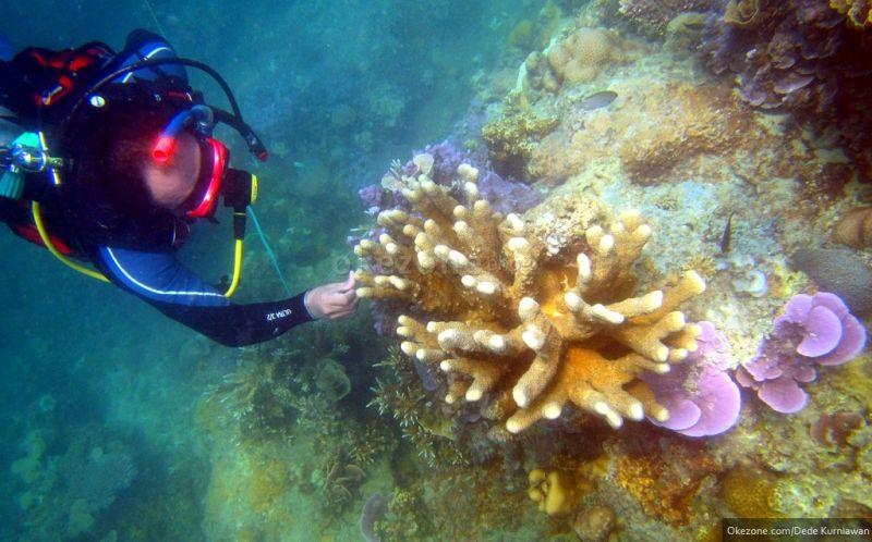 https: img.okezone.com content 2021 01 05 406 2338951 program-restorasi-terumbu-karang-di-bali-berjalan-sesuai-rencana-h4o6cELME3.jpg