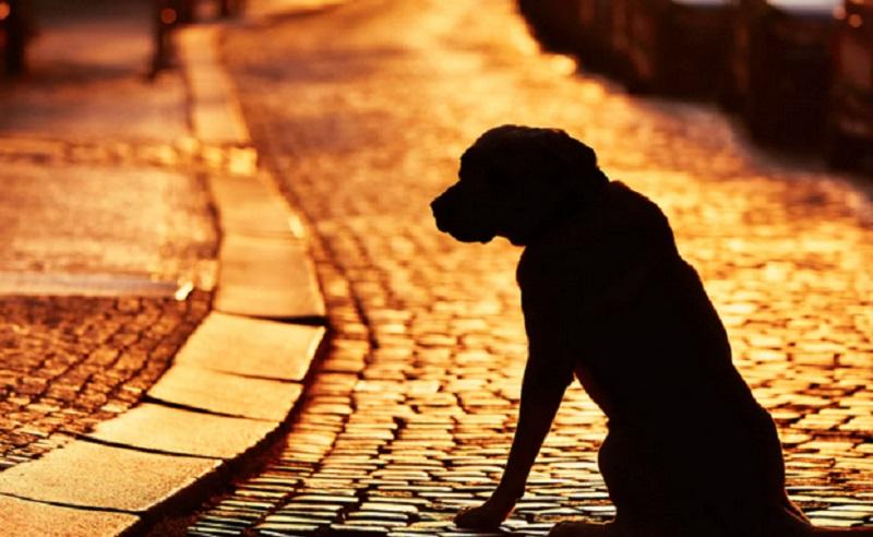 https: img.okezone.com content 2021 01 05 612 2339355 8-tahun-hilang-akhirnya-anjing-ini-kembali-bertemu-pemiliknya-ReaLUWq5hS.jpg