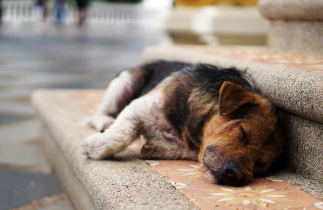 https: img.okezone.com content 2021 01 11 406 2342696 anjing-terperangkap-di-lubang-usai-dibawa-ke-cagar-alam-aksi-penyelamatannya-dramatis-ysji8W4fbL.jpg