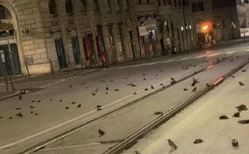https: img.okezone.com content 2021 01 11 612 2342485 ratusan-burung-mati-misterius-apa-sebabnya-XHfP9zXF1x.jpg