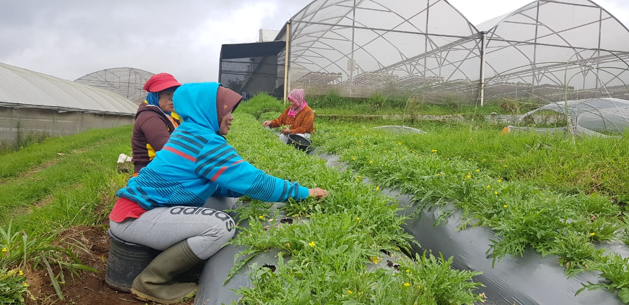 https: img.okezone.com content 2021 01 13 320 2343919 mentan-buka-bukaan-soal-proyek-food-estate-FWsA2OCSmR.jpeg