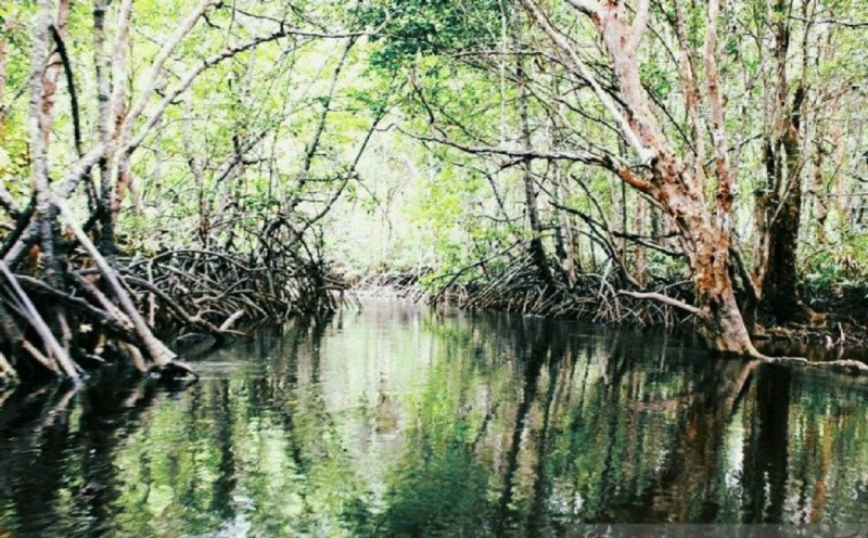 https: img.okezone.com content 2021 01 13 408 2343602 asahan-kini-punya-wisata-alam-tracking-mangrove-di-silo-baru-ZFLTdSDF31.jpg