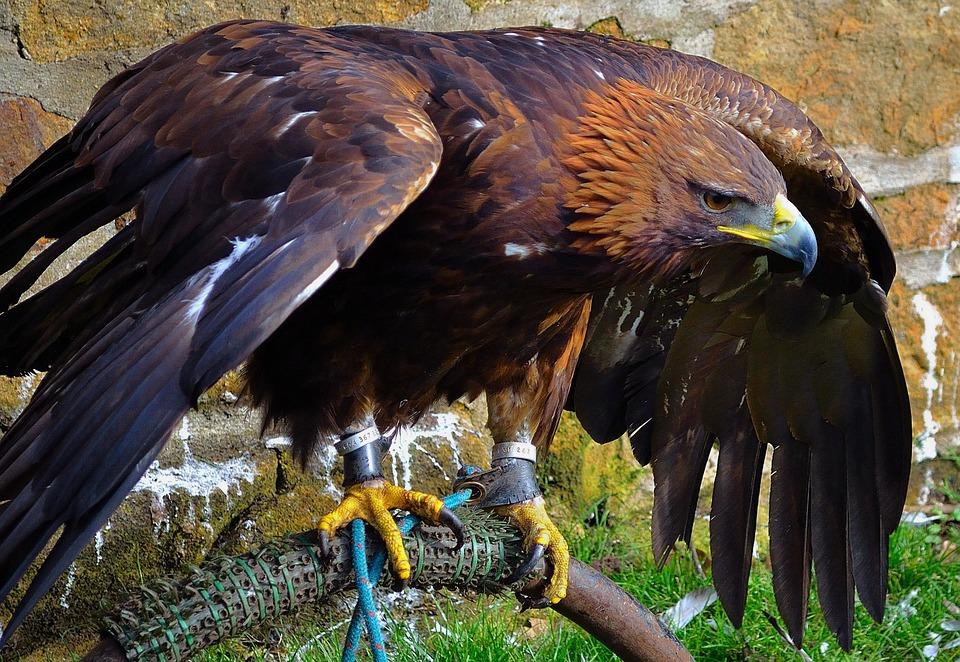 https: img.okezone.com content 2021 01 17 406 2345886 9-burung-predator-penghuni-taman-nasional-bromo-tengger-semeru-FPZBYMqD9v.jpg
