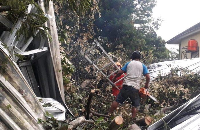 https: img.okezone.com content 2021 01 21 510 2348113 hujan-angin-tumbangkan-sejumlah-pohon-dan-terbangkan-atap-rumah-NjvtGkoox0.jpg