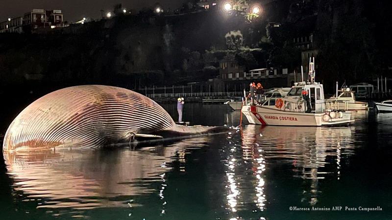 https: img.okezone.com content 2021 01 22 18 2349056 bangkai-salah-satu-paus-terbesar-ditemukan-di-italia-ARYv304kIQ.jpg