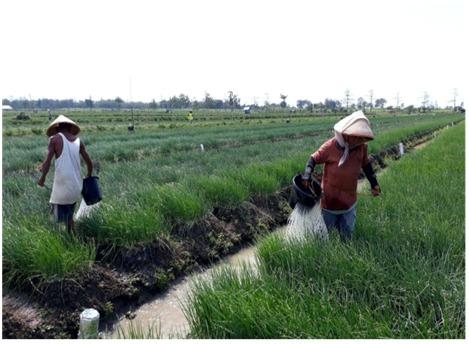 https: img.okezone.com content 2021 01 25 620 2350377 subsidi-pupuk-tingkatkan-produksi-petani-hingga-rp98-4-triliun-Px4qVAnvST.jpeg