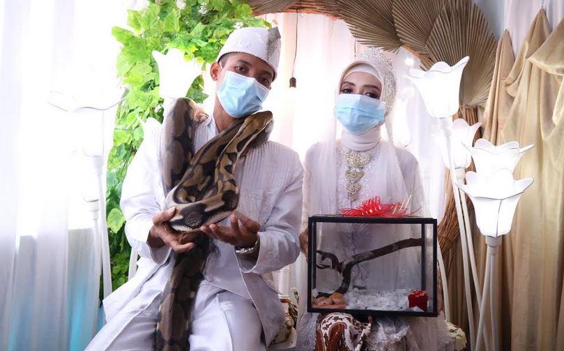 https: img.okezone.com content 2021 01 26 338 2351273 pasangan-pengantin-ini-jadikan-ular-piton-sebagai-mas-kawin-ini-ceritanya-uA7HMfBVlv.JPG
