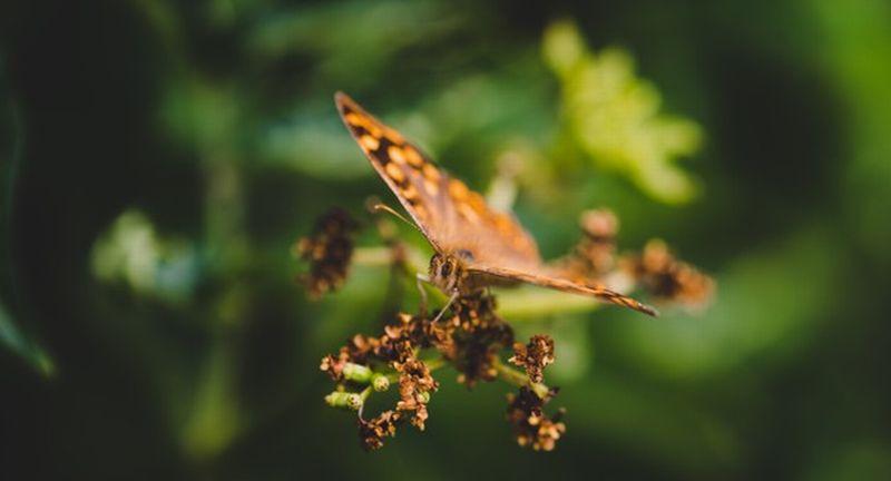 https: img.okezone.com content 2021 01 26 65 2350911 akhirnya-terungkap-misteri-kepakan-sayap-kupu-kupu-yang-membingungkan-ilmuwan-t2K0YT6rz1.jpg