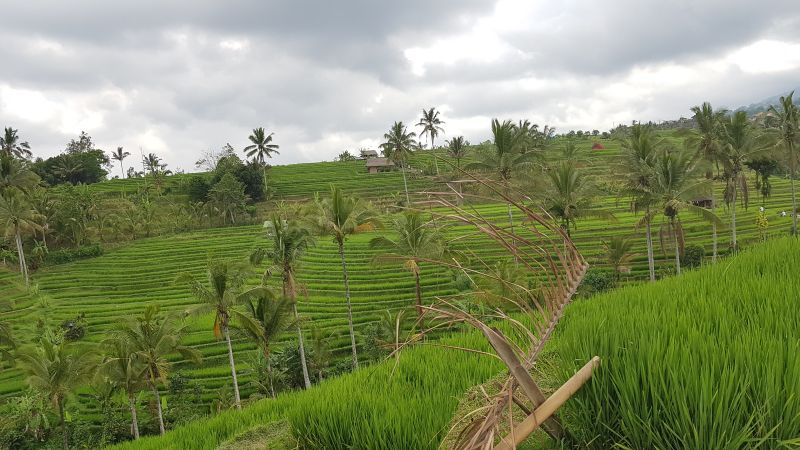 https: img.okezone.com content 2021 01 27 320 2351746 menko-luhut-food-estate-kesempatan-emas-bangun-pertanian-modern-C2TMw8yVRV.jpg
