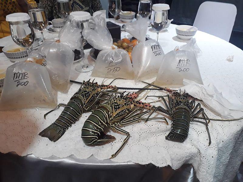 https: img.okezone.com content 2021 01 27 320 2351788 menteri-trenggono-pastikan-ekspor-benih-lobster-dihentikan-g56fm9nhNP.jpg