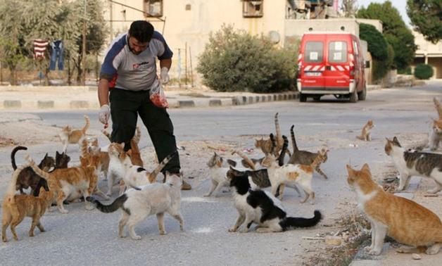 Beri Makan Kucing Liar, Perempuan Lansia Ini Dituntut : Okezone News