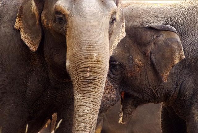 https: img.okezone.com content 2021 02 03 612 2355436 lucu-banget-sekelompok-gajah-guling-guling-kesenangan-lihat-salju-turun-PYHZP7JxKw.jpg