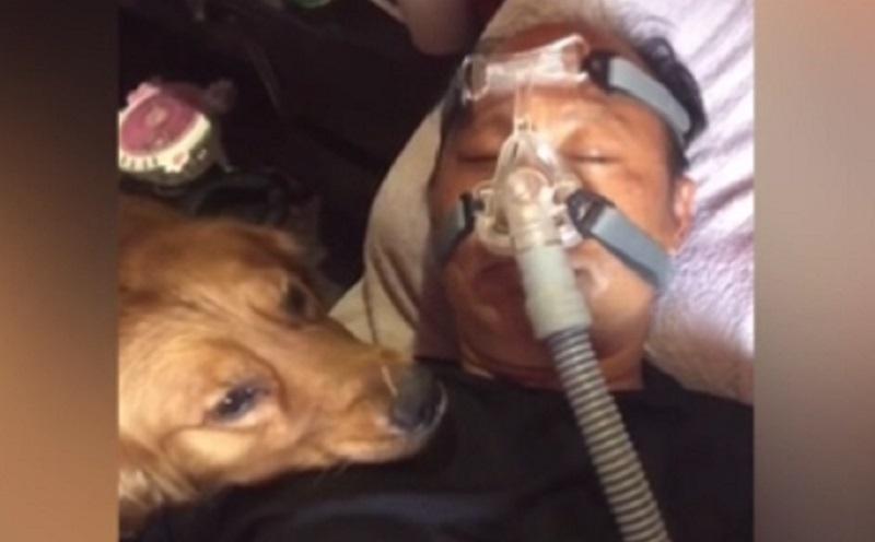 https: img.okezone.com content 2021 02 03 612 2355809 kisah-haru-anjing-ini-tak-mau-melepaskan-pelukan-dari-pemiliknya-yang-pakai-ventilator-HEHxQYEolP.jpg