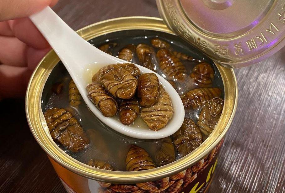 https: img.okezone.com content 2021 02 04 301 2356334 camilan-ekstrem-korea-berbahan-larva-ulat-sutera-berani-nyoba-8y9q1DNoYA.JPG