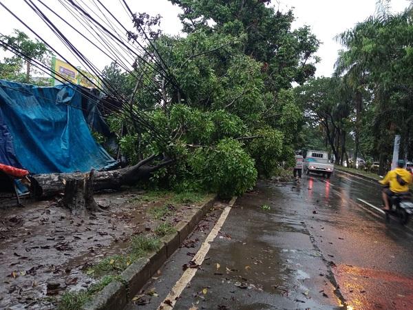 https: img.okezone.com content 2021 02 05 338 2356764 hujan-angin-landa-bogor-3-pohon-besar-rumah-R0a4gWGRa3.jpg