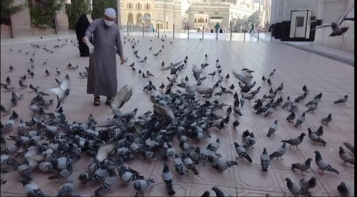 https: img.okezone.com content 2021 02 07 614 2358089 ekslusif-dari-tanah-suci-banyaknya-burung-dara-makkah-dan-madinah-rrIXrfl60S.jpg